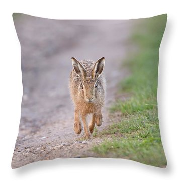 Brown Hare Approaching Down Track Throw Pillow