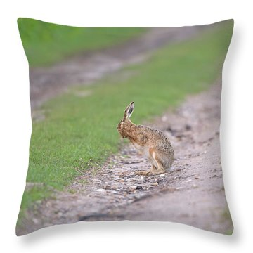 Brown Hare Cleaning Throw Pillow