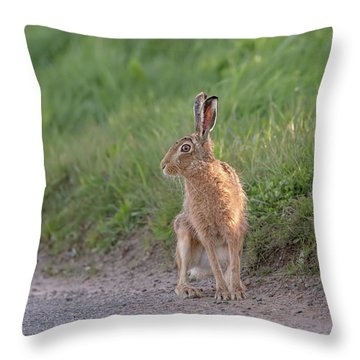 Brown Hare Listening Throw Pillow