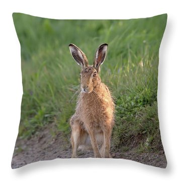 Brown Hare Sat On Track At Dawn Throw Pillow