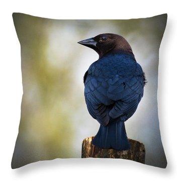 Brown-headed Cowbird Throw Pillow