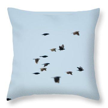 Brown-headed Cowbirds In Eastern Throw Pillow