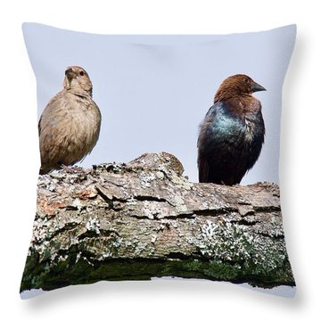 Brown Headed Cowbirds Sitting In A Tree Throw Pillow