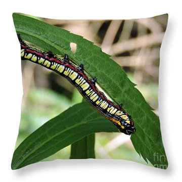 Brown Hooded Owlet Moth Larva  Throw Pillow