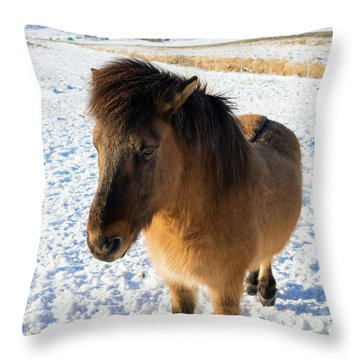 Throw Pillow featuring the photograph Brown Icelandic Horse In Winter In Iceland by Matthias Hauser