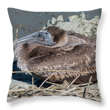 Brown Pelican 3 March 2018 Throw Pillow