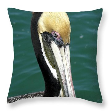 Brown Pelican  Throw Pillow by Allan  Hughes