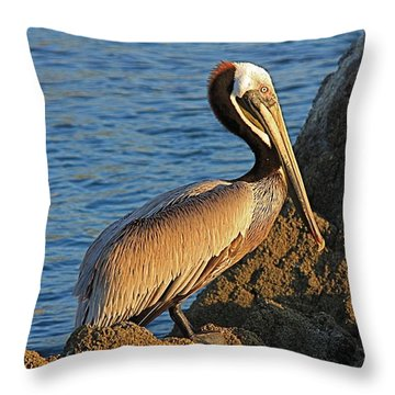 Brown  Pelican Throw Pillow by Nicola Fiscarelli