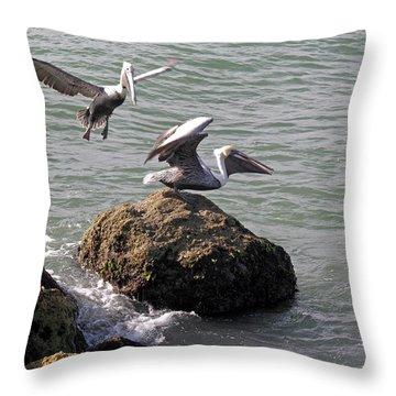 Brown Pelicans In Florida  Throw Pillow by Allan  Hughes