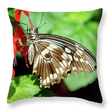 Brown Swallowtail Butterfly Throw Pillow