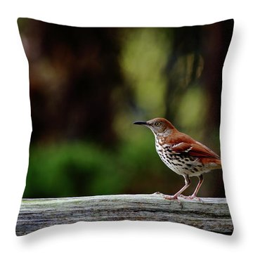 Brown Thrasher Facing East Throw Pillow