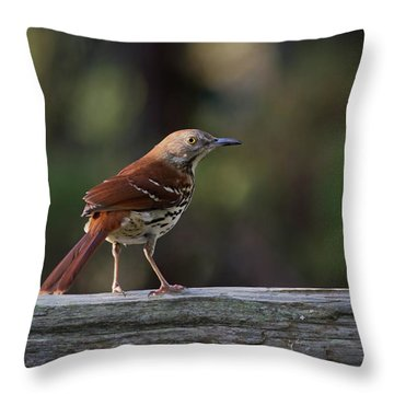 Brown Thrasher Facing West Throw Pillow