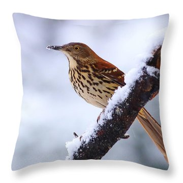 Brown Thrasher In Snow Throw Pillow