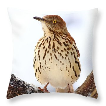 Brown Thrasher With Snow  Throw Pillow