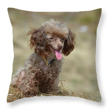 Brown Toy Poodle On Bail Of Hay Throw Pillow