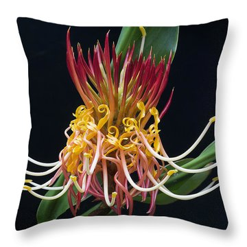 Brownea Macrophylla Tropical Flower Throw Pillow