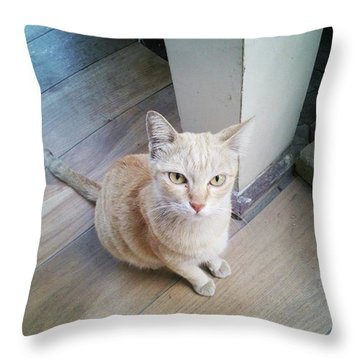 Throw Pillow featuring the photograph Brunch Companion. I Couldn't Resist by Mr Photojimsf