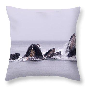Bubble Feeding Humpbacks Throw Pillow by Darcy Michaelchuk