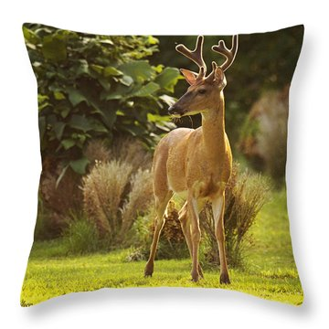 Throw Pillow featuring the photograph Buck by Angel Cher