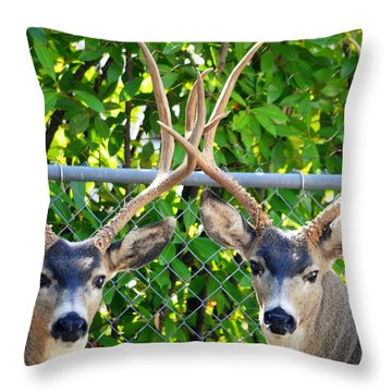 Buck Eyes Throw Pillow