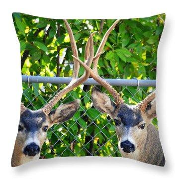 Buck Eyes Throw Pillow