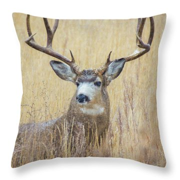 Buck In Snow Throw Pillow