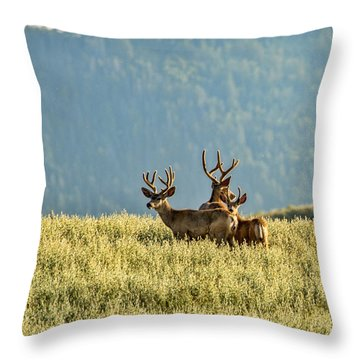 Buck Mule Deer In Velvet Throw Pillow by Daniel Hebard