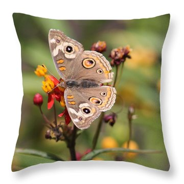 Buckeye Butterfly Throw Pillow