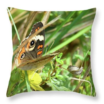 Throw Pillow featuring the photograph Buckeye In The Leaves by Sally Sperry