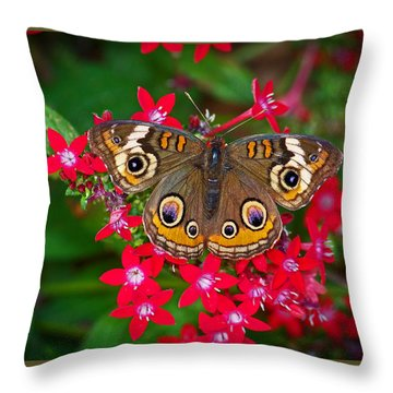 Buckeye On Pentas Throw Pillow by Judy Wanamaker