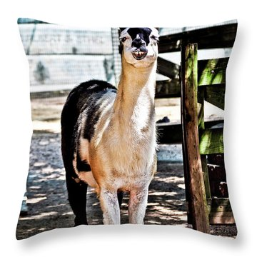 Bucktoothed Llama Throw Pillow