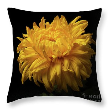 Bud Opening-chrysanthemum 'allison Peace Throw Pillow