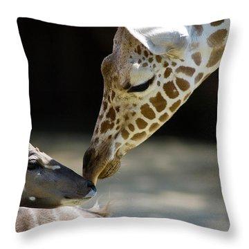 Throw Pillow featuring the photograph Buddies by Steve Stuller