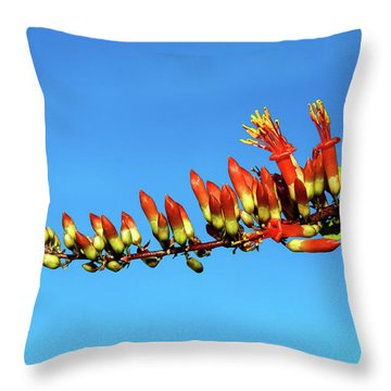 Throw Pillow featuring the photograph Budding Ocotillo by Robert Bales