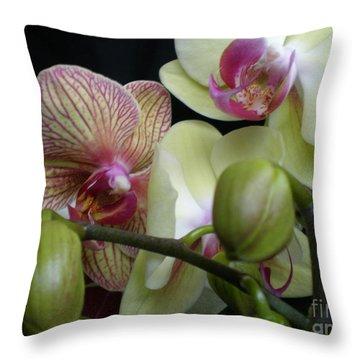 Budding Orchids  Throw Pillow