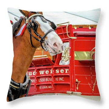 Budweiser Clydesdale In Full Dress Throw Pillow by Bill Gallagher
