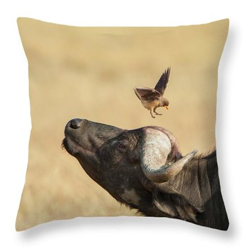 Buffalo And Oxpecker Bird Throw Pillow