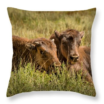 Throw Pillow featuring the photograph Buffalo Babes by The Forests Edge Photography - Diane Sandoval