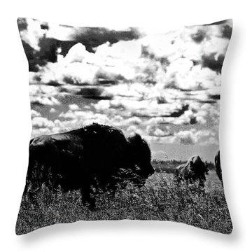 Buffalo Dark Sky Throw Pillow