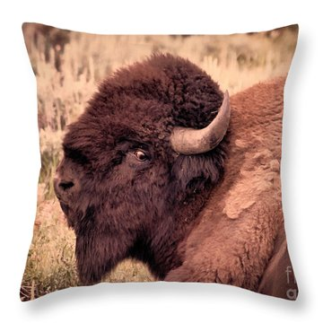 Throw Pillow featuring the photograph Buffalo Eye On You by Janice Rae Pariza