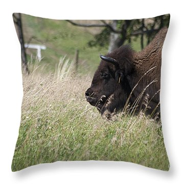 Buffalo Gal 20120724_378a Throw Pillow by Tina Hopkins