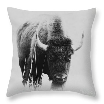 Buffalo Gal Throw Pillow by Barbara Henry