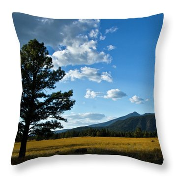 Throw Pillow featuring the photograph Buffalo Park 3 by Tom Kelly