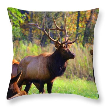 Buffalo River Elk Throw Pillow