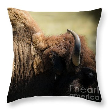 Throw Pillow featuring the photograph Buffalo Shed by The Forests Edge Photography - Diane Sandoval