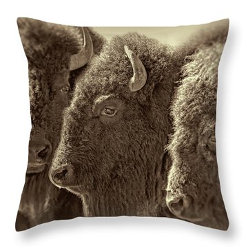 Throw Pillow featuring the photograph Trio American Bison Sepia Brown by Jennie Marie Schell