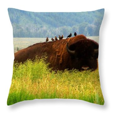 Buffalo Wings Throw Pillow