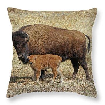 Buffalo With Newborn Calf Throw Pillow