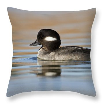 Bufflehead In Early Morning Throw Pillow