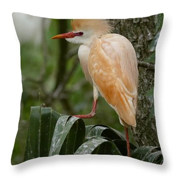Buffy - The Cattle Egret Throw Pillow by Myrna Bradshaw